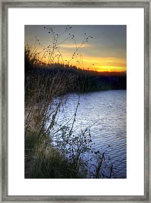 Bramble Pond Framed Print