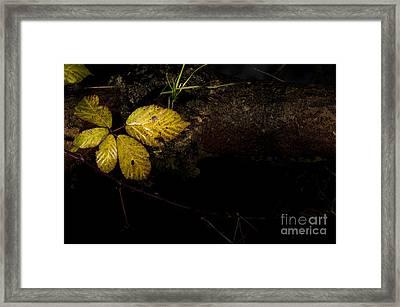 Bramble Tree Framed Print by Anne Gilbert