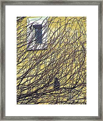 Branch Office Framed Print by Joe Jake Pratt