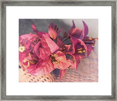 Branch With Bougainvillea Flowers  Framed Print by Sviatlana Kandybovich
