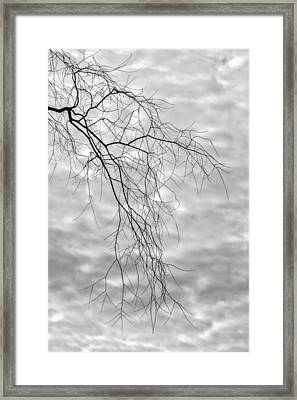 Branches And Clouds Framed Print by Robert Ullmann