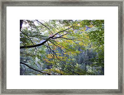 Branches And Leafs Framed Print