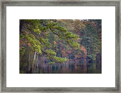 Branches Framed Print by David Cote