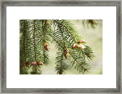 Branches Framed Print by Idaho Scenic Images Linda Lantzy
