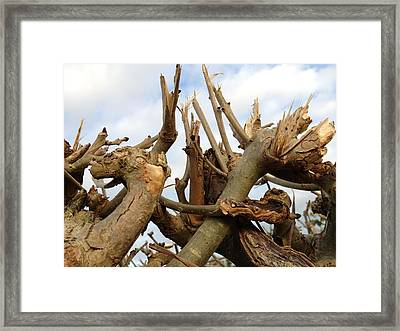 Branches Framed Print by James Bradley