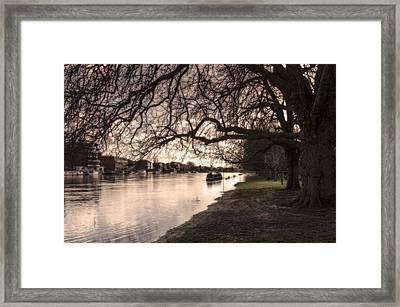 Branches Framed Print