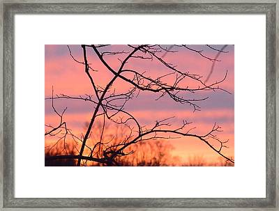 Framed Print featuring the photograph Branches Meet The Sky by Dacia Doroff