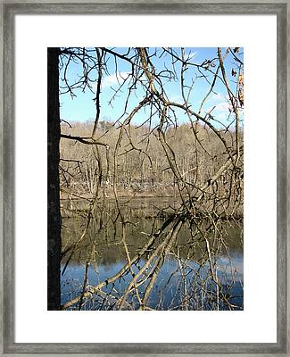 Framed Print featuring the photograph Branches by Melissa Stoudt