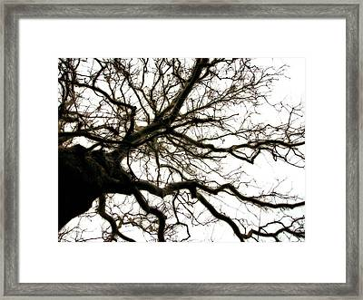 Branches Framed Print by Michelle Calkins
