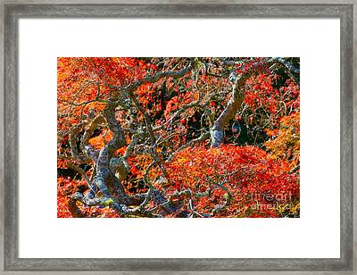 Branches Of Color Framed Print by Cathy Dee Janes