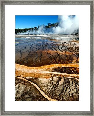 Branches Of Life Framed Print by Tranquil Light  Photography