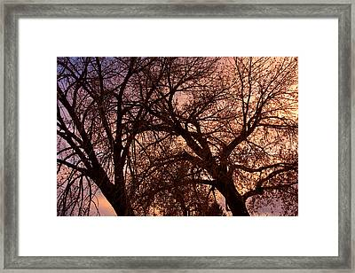 Branching Out At Sunset Framed Print by James BO  Insogna
