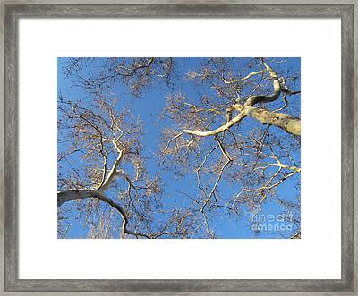 Branching Out Framed Print by Melissa Stinson-Borg