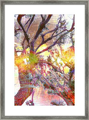 Branching Out Nature Art Framed Print by John Fish