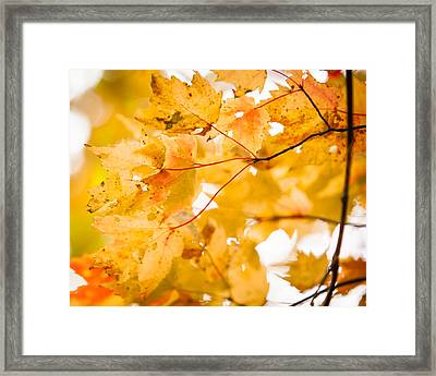 Branching Yellow Framed Print by Melinda Ledsome