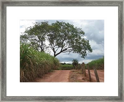 Brasil Rural 1 Framed Print by Maria Akemi  Otuyama