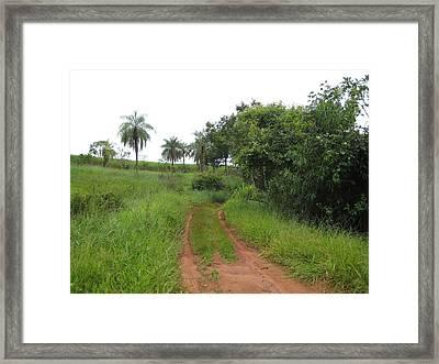Brasil Rural 3 Framed Print by Maria Akemi  Otuyama