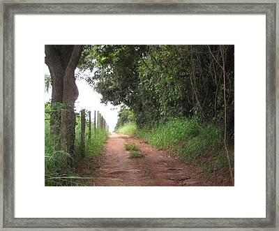 Brasil Rural 4 Framed Print by Maria Akemi  Otuyama