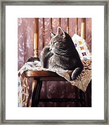 Brat Cat Framed Print by Dianna Ponting