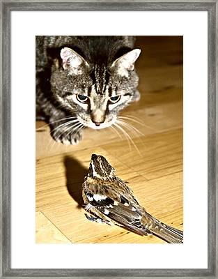 Brave Bird  Framed Print