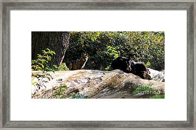 Brave One Framed Print by Melissa Petrey