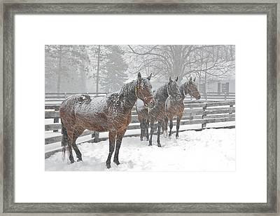 Framed Print featuring the photograph Braving The Storm by Gary Hall