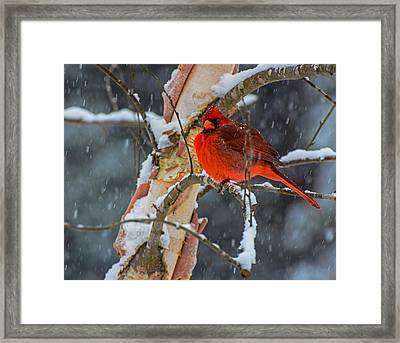 Braving The Storm  Framed Print