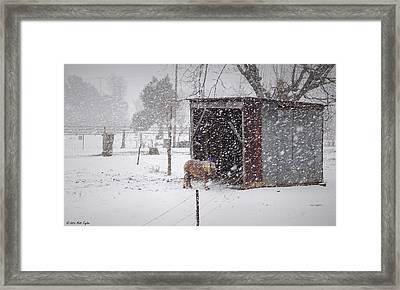 Braving Yet Another Round Framed Print