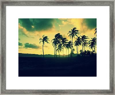 Brazil Palm Trees At Sunset Framed Print
