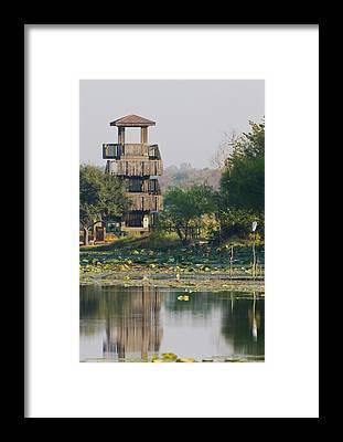 Brazos Bend State Park Framed Prints