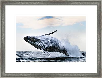 Breach Framed Print