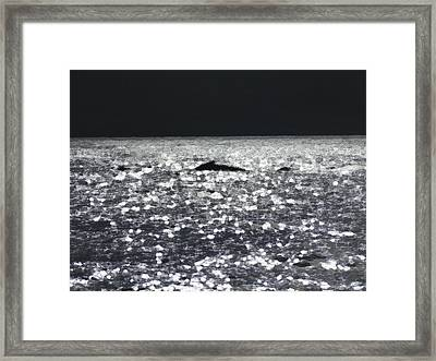 Breaching 2 Framed Print by Marcello Cicchini