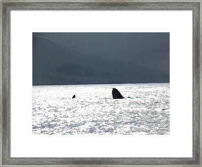 Breaching Framed Print by Marcello Cicchini