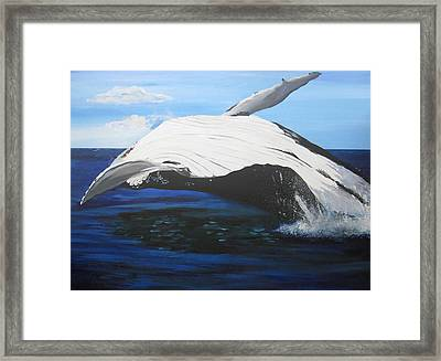 Breaching Whale Framed Print by Cathy Jacobs
