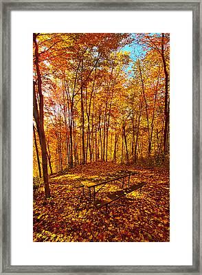 Break Time Framed Print by Phil Koch