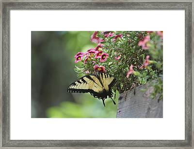 Framed Print featuring the photograph Breakfast At The Windowbox by Robert Camp