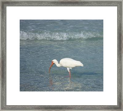 Framed Print featuring the photograph Breakfast by Bill Woodstock