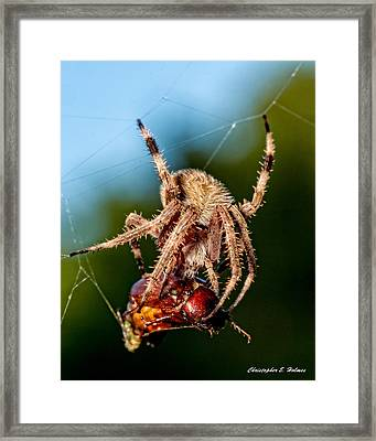 Breakfast Framed Print by Christopher Holmes
