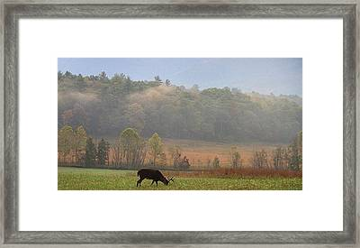 Breakfast In Cades Cove Framed Print by Dan Sproul