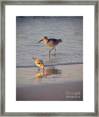 Breakfast In The Surf Framed Print