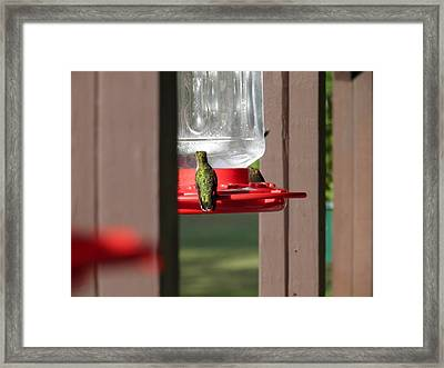 Framed Print featuring the photograph Breakfast  by Nick Kirby