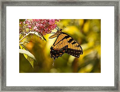 Breakfast On The Veranda... Framed Print
