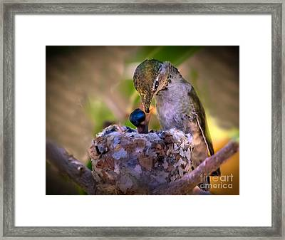 Breakfast Framed Print by Robert Bales