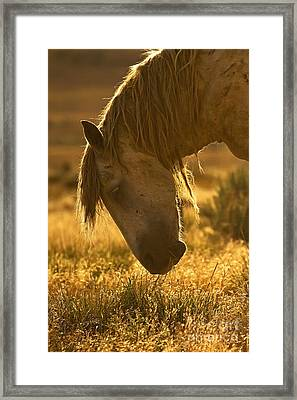 Breakfast - Signed Framed Print
