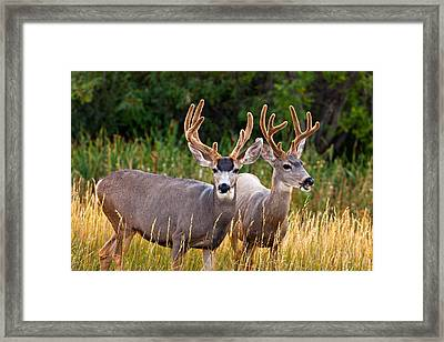 Breakfast With Friends Framed Print
