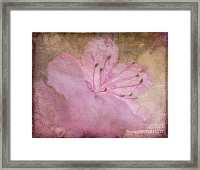 Breaking Through Framed Print by Arlene Carmel