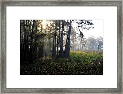 Breaking Through Morning Fog Framed Print