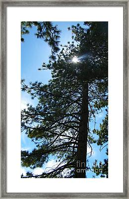 Framed Print featuring the photograph Breakthrough by Bobbee Rickard