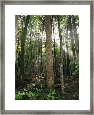 Breakthrough Sun Framed Print by Shannon Louder