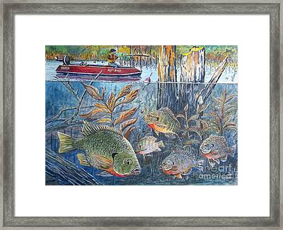 Bream Fishing Framed Print by Don Hand